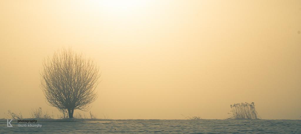 Waldviertel im Winternebel und Hund (2 von 10)