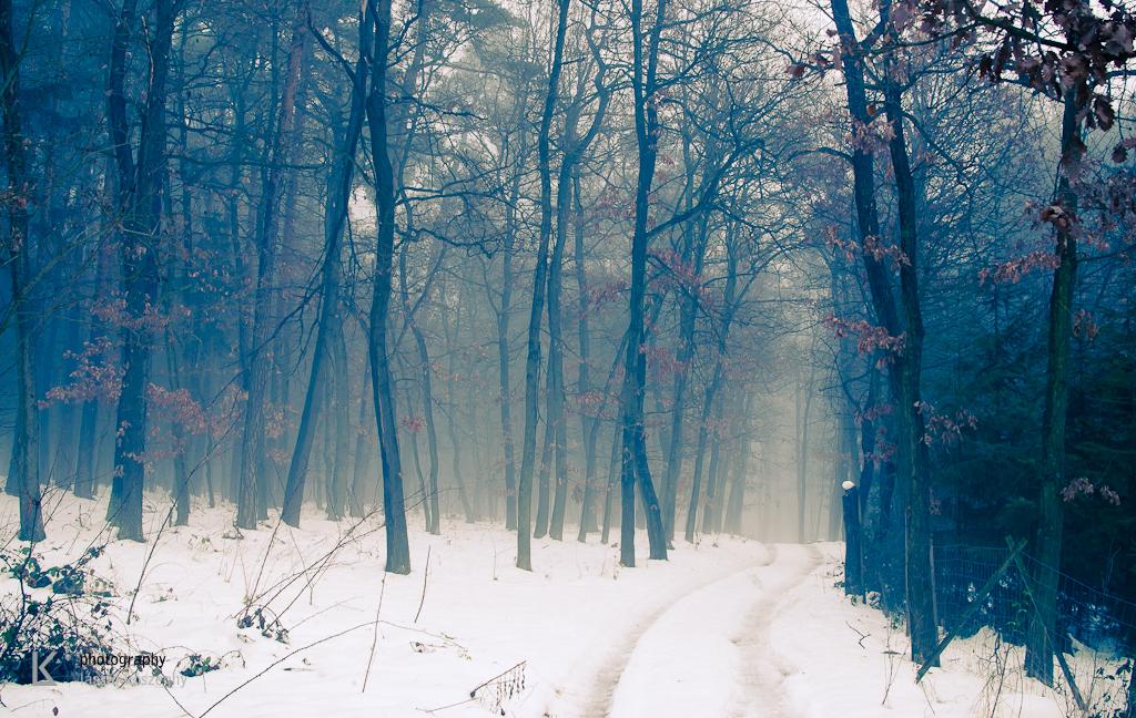 Waldviertel im Winternebel und Hund (4 von 10)