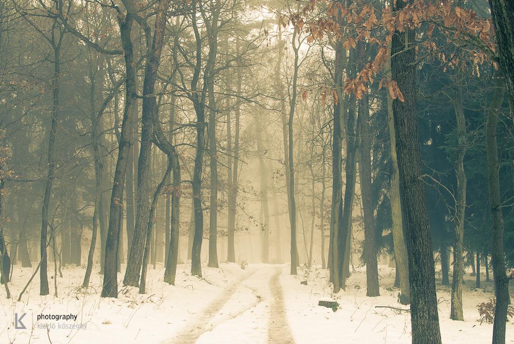 Waldviertel im Winternebel und Hund (5 von 10)