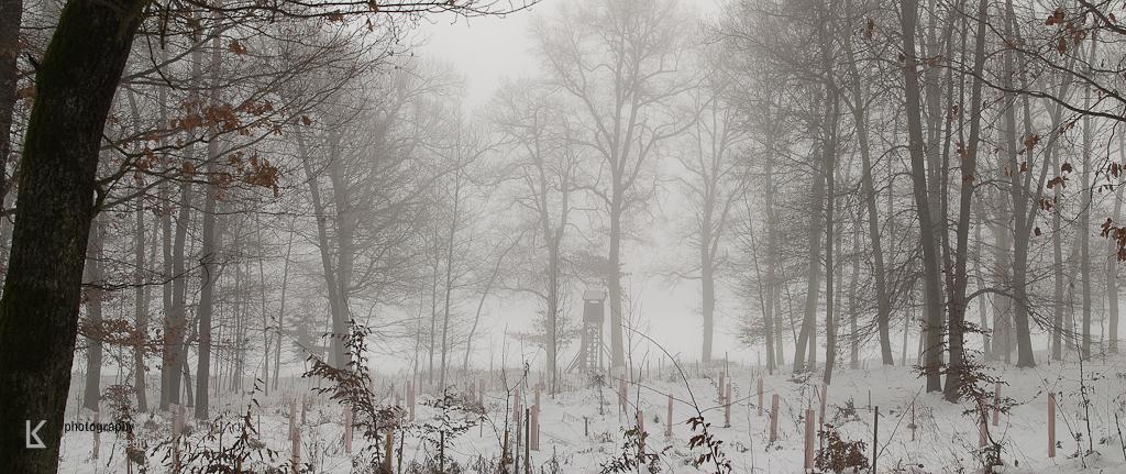 Waldviertel im Winternebel und Hund (6 von 10)