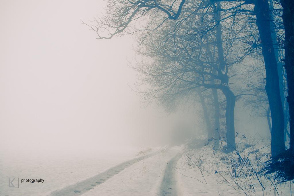 Waldviertel im Winternebel und Hund (7 von 10)