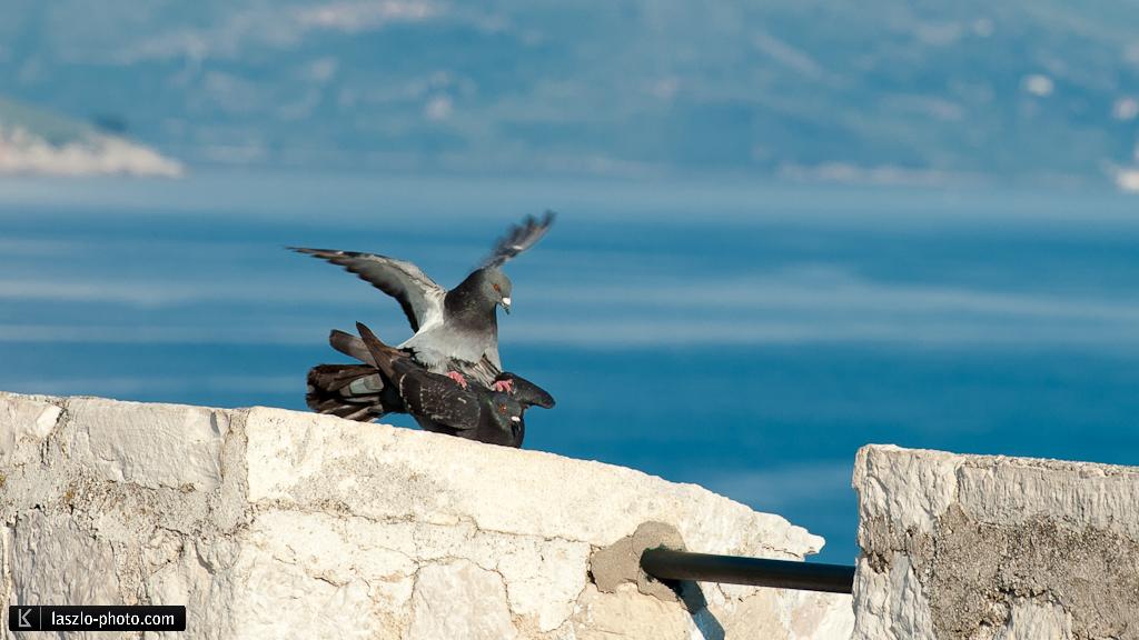 Dubrovnik-3591
