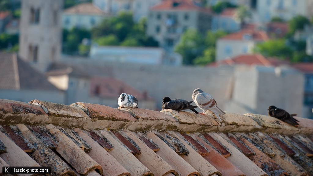 Dubrovnik-3603