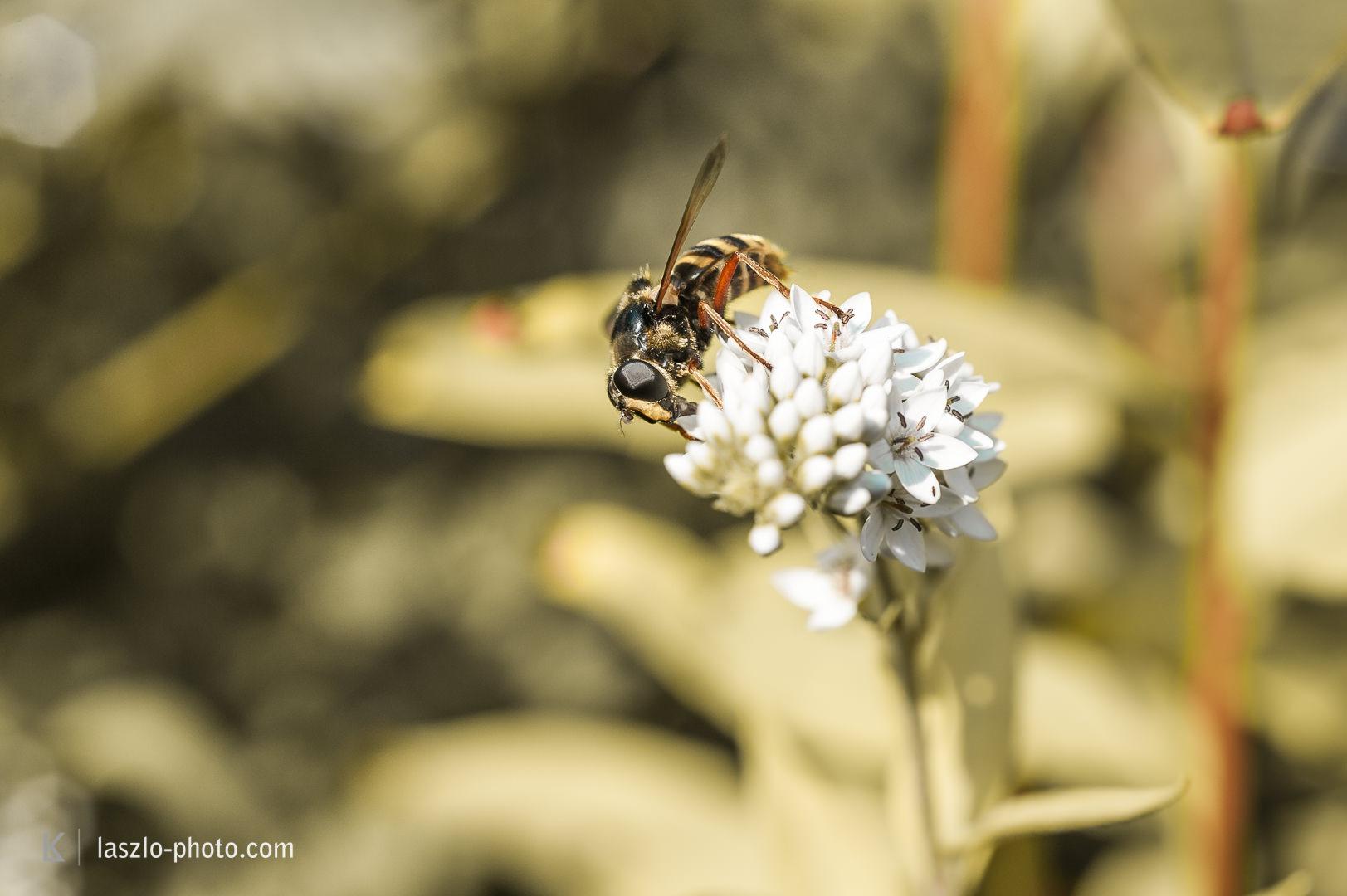 Bienen, Freihand-Makro